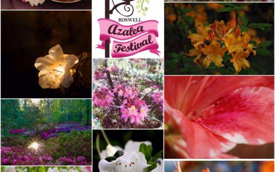 2017 Azalea Festival Images on Display