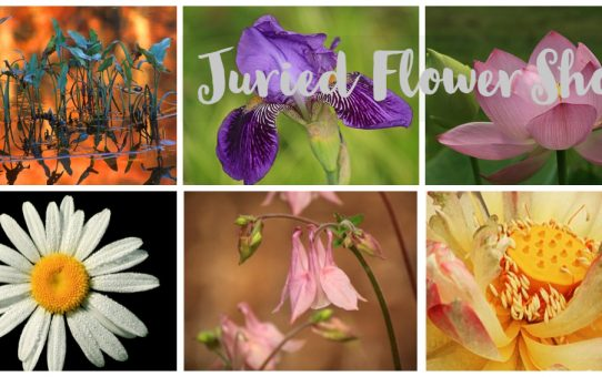 First Annual Juried Flower Show