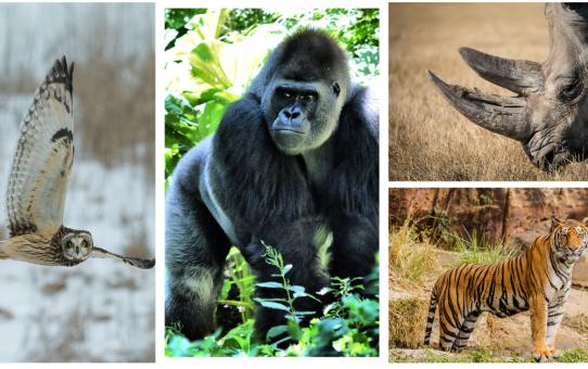 June Photo Review - Wildlife