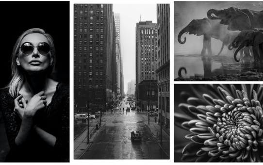 August Photo Review (Black & White)