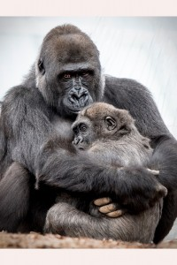 People And Animals (3rd) Gorilla Love - Marvin Price