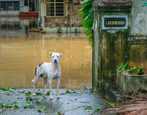 People and Animals (2nd) After the Cyclone – Chennai India by Mike Garver