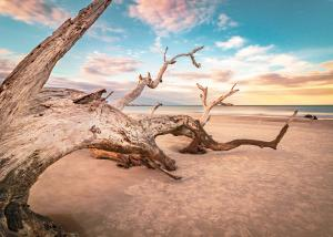 Driftwood BeachLandscape & Nature