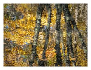 Reflections of KlimtGittel PriceStill Life & Abstract