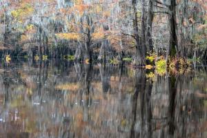 "Honorable Mention PrintSteve Grundy""Caddo Lake Reflections"""