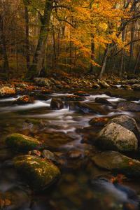 Tremont GoldTravis RhoadsLandscape & Nature